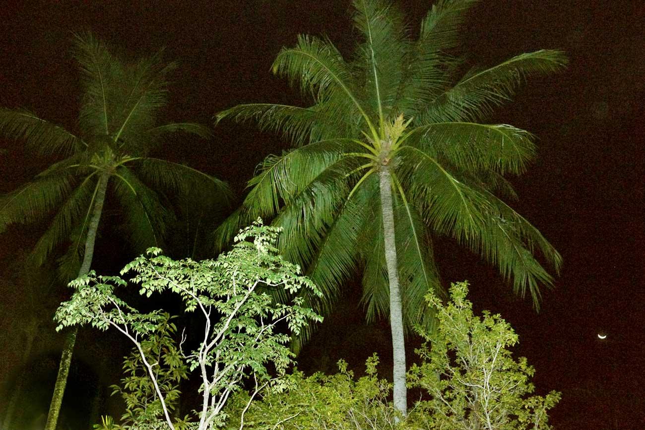 palms-phuket