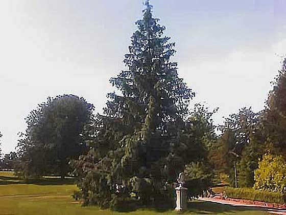 Sri-Chinmoy-Tree-Zurich-2