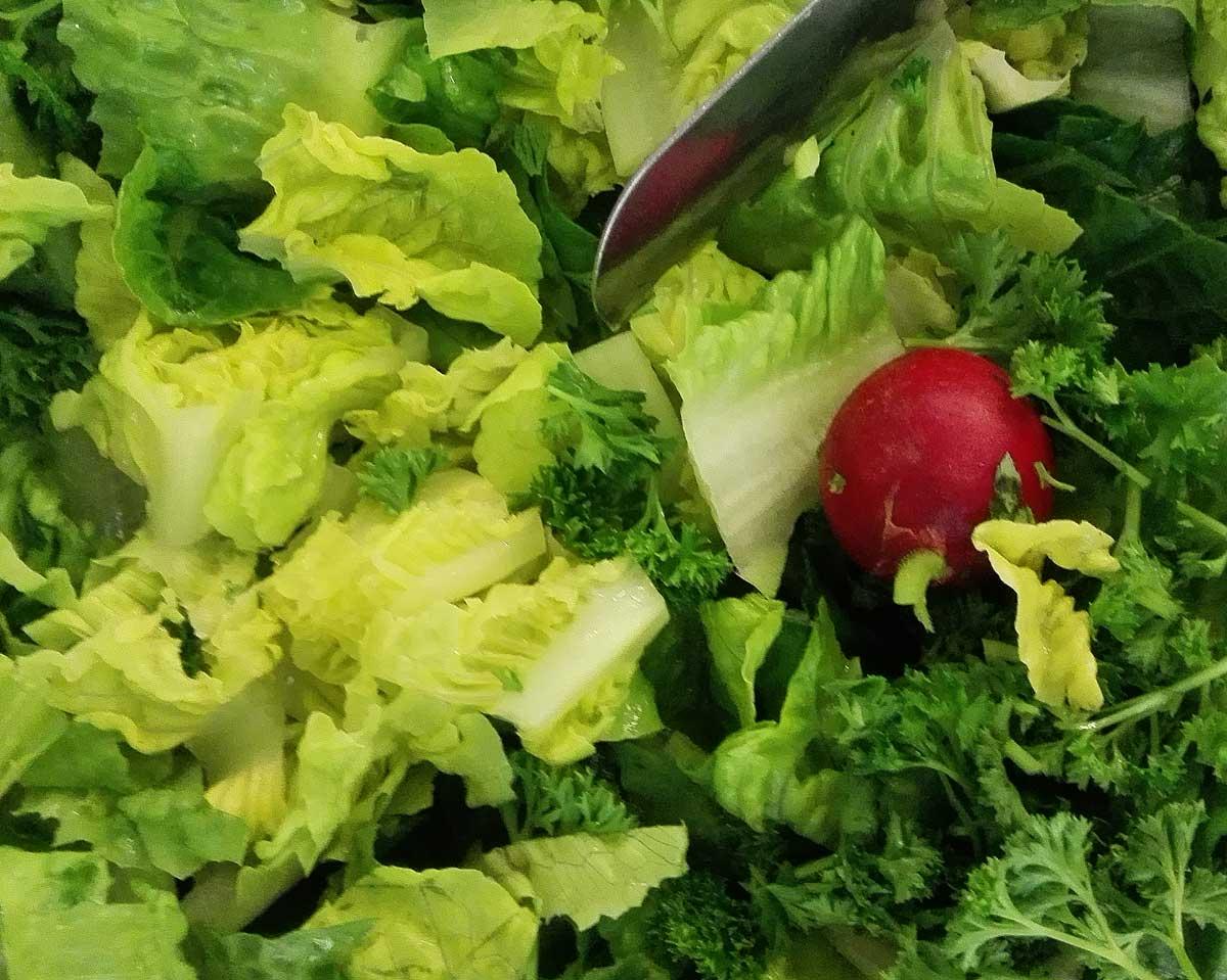 bio lattich die mutter aller salate vegan bio news. Black Bedroom Furniture Sets. Home Design Ideas