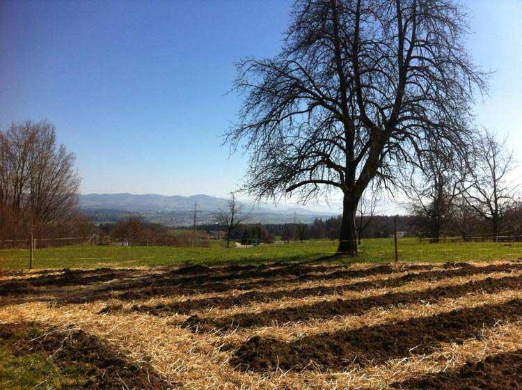 Hof-Narr-Gemüsefeld